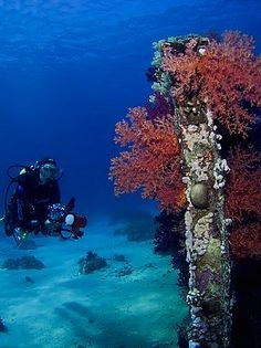 All Inclusive Red Sea Holiday with World Tour Advice