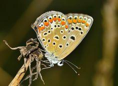https://pixabay.com/da/insekter-sommerfugl-m%C3%B8l-571751/