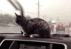 People who can't drive in a little rain. | 11 Common Causes Of Road Rage And How To Cope