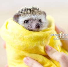 Fast Drying Pet African mini Hedgehog Grooming Microfiber Towel Pet Supply Dog Cat Towel Clean Cham Free Shipping M50