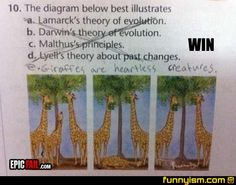 Here are some funny answers to test questions which will make you laugh a lot to say the least. These funny sarcastic quotes in the funniest test answers will manage to convert these tests into funny tests. Stupid Test Answers, Funny Exam Answers, Funniest Kid Test Answers, Kids Test Answers, Homework Humor, Funny Kids Homework, Darwin's Theory Of Evolution, Epic Fail, Kids Writing