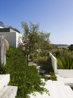 This garden is located in Coogee, Sydney and designed by Landscape Designer and Contributor Will Dangar, in association … Bush Garden, Hillside Garden, Dry Garden, Garden Landscape Design, Outdoor Plants, Outdoor Gardens, Outdoor Spaces, Australian Native Garden, Succulent Landscaping