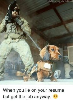 When you lie on your resume but get the job anyway! My Colonel would have done this and been a total badass! Bravest dachshund ever ❤️ Dachshund Funny, Dachshund Puppies, Weenie Dogs, Dachshund Love, Funny Dogs, Cute Puppies, Cute Dogs, Daschund, Doggies