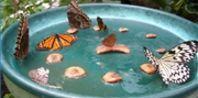Homemade Butterfly Feeder to Attract Butterflies   eHow.com