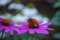 Bumble Bee 3  2014 Nikon D60