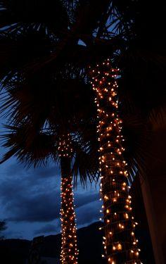 Palm trees at night photo, palm tree print, palm tree canvas, summer night photo, tropical nigh