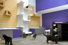 Friends for Life Don Sanders Adoption Center, Adult Cat Room