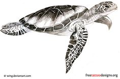 Sea Turtle Tattoo Designs | hawaiian-tribal-turtle-tattoo - Tattoos Crave Tat Ideas - Anny ...
