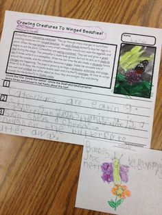 Little Bird Kindergarten: Informational Text, butterfly close reading activity with writing, they can do it!