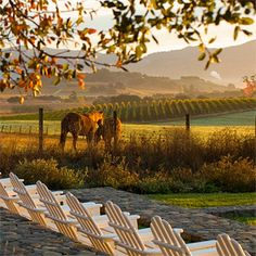 Napa Valley- what a beautiful place for a wedding.