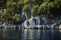 kohalmitamas:  tree - rock- sea by rcanonay