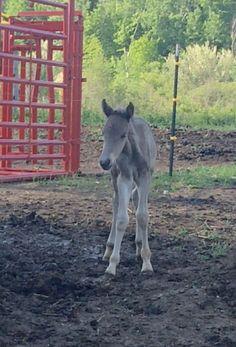 Colt 1 day old