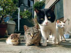 40年分の猫写真が200枚超!岩合光昭の写真展がヒカリエで開催   EVENT   LIFE   WWD JAPAN.COM