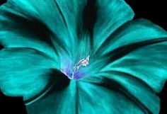 turquoise painting - Google Search