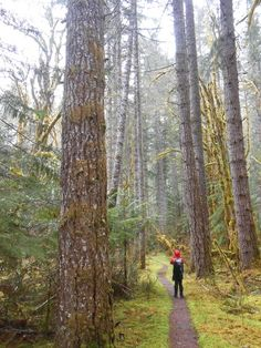 A hiker perched on a carpet of moss is dwarfed by trees on the Duckabush River Trail. Photo by Anna Roth.