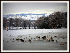 Snowy and frozen Roath Park Lake, Cardiff by DJLeekee, via Flickr