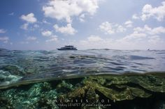 #Plongée aux #Maldives : les #atolls du centre version croisière #bio ! #voyage #trip #ile #underwater