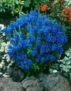 Perennat: valtava valikoima uutuuksia ja suosikkeja - Viherpeukalot.fi My Flower, Flowers, Garden Landscaping, Home And Garden, Yard, Landscape, Spring, Plants, Heavenly
