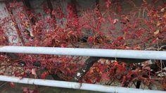greece. mjt. mytilene. autumn. red