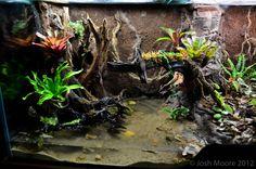 . Reptile House, Reptile Habitat, Reptile Room, Reptile Cage, Reptile Enclosure, Tarantula Enclosure, Gecko Terrarium, Aquarium Terrarium, Terrarium Plants
