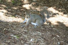 Grabbing an afternoon snack, a peanut.