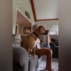 Funny Animal Jokes, Funny Dog Memes, Funny Dog Videos, Funny Animal Pictures, Animal Memes, Cute Funny Dogs, Cute Funny Animals, Cute Dogs And Puppies, Doggies