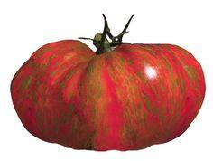 Heirloom Tomato Seeds, Tomatoes, Non-GMO, Untreated, Organic Seed – Sandia Seed Company Heirloom Tomato Seeds, Heirloom Tomatoes, Potted Fruit Trees, Types Of Lettuce, Cherokee Purple, Beefsteak Tomato, Seed Catalogs, Port Wine, Wild Boar