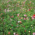 50 LB. Butterfly & Hummingbird Wildflower Seed Mix