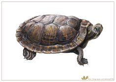illustration artwork a miniature  turtle watercolor