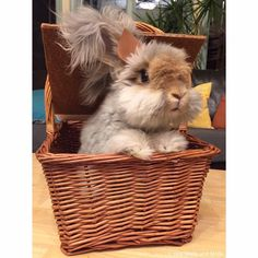 Bunnies & baskets