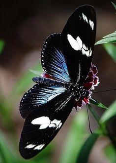 ~~Butterfly by Jim Steinmiller~~