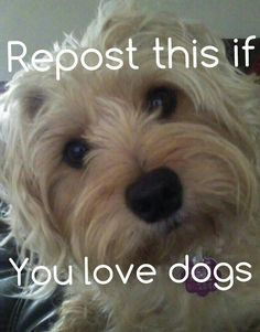 Repost this if you love dogs