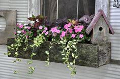 The Garden Patch - The Garden Patch