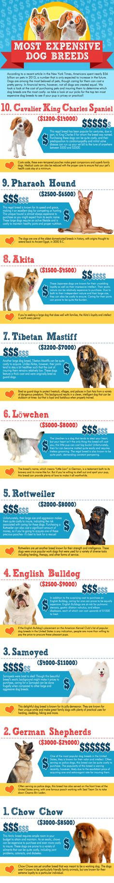 The most expensive #dog breeds - According to a recent article in the New York Times, Americans spent nearly $56 billion on pets in 2013. Can you guess which dog breeds are the most expensive?