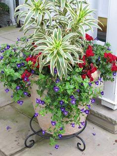 pétunias en violet, fleurs rouges et chlorophytum comosum pour enjoliver la terrasse
