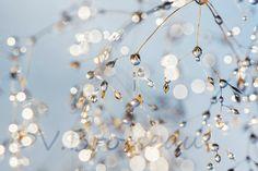 Brindilles cristallines - Photo de Véronique Brosseau - (Gouttes d'eau + Tout en bleu ciel)