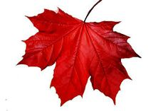 Risultati immagini per leaf png