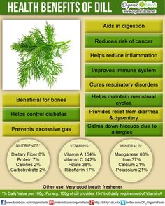 Health Benefits of Dill | Organic Facts. Dill grows quickly and easily in Indian weather conditions and is an essential herb to any herb garden. Dill is great with natural yoghurt / dahi, in salads, added to any kind of cereal base, or cooked with dal. It is a herb available in surplus in local vegetable markets of Maharashtra.