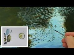 Tutorial #002 How to Paint Water - YouTube