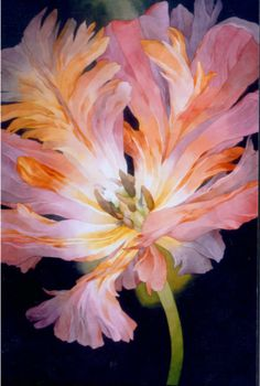 jean crane watercolor