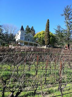 St Clement Winery in Napa Valley, just imagine how beautiful the view from the porch is...
