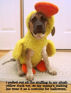 Absolutely hilarious dog shaming...poor duck/puppy