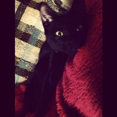 Another of my FAVORITES of all time #black #cat # kitten #kitty #babyboy #blackcat #blackkitty #blackkitten #yelloweyes