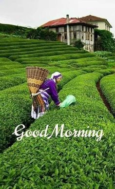 Good Morning Tea, Good Morning Nature, Good Morning Flowers, Good Morning Wishes, World Environment Day Posters, Good Morning Gif Images, Growing Vegetables, Corporate Gifts, Bible Quotes