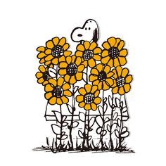 Snoopy and sunflowers