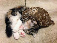 Veja amizades improváveis, mas muito fofas, entre animais