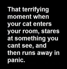 : ) That terrifying moment when your cat enters your room ..... stares at something ......