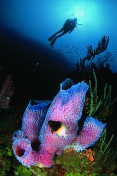Eight great shore diving spots... not suprising that Bonaire is number one :)