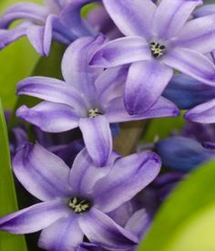 Purple Flower Names Enlisted With A Beautiful Photo Gallery
