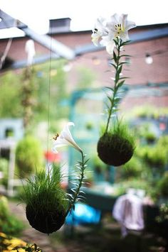 Flores plantadas em Kokedama